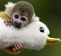 monkey_and_stuff_duck_2.jpg
